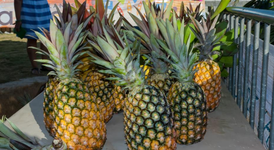 Gregory Town Celebrates 30 Years Of Pineapple Festival