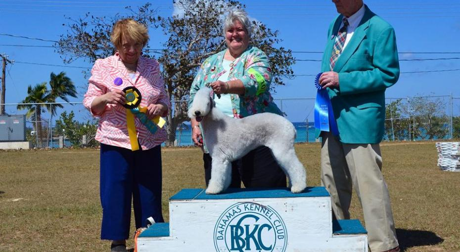 Awarding 'Best in Show' at the Bahamas Kennel Club International Dog Show.